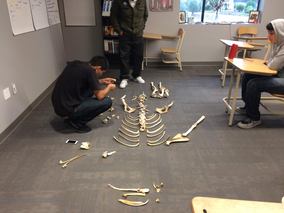 RC students piece together bones found on the Ranch